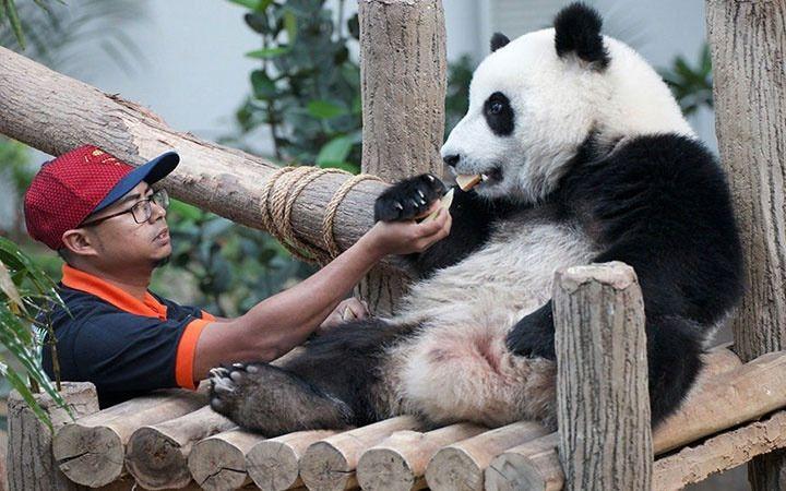 Pandalarga so'nggi gap: sizlar yashashga layoqatli emassiz
