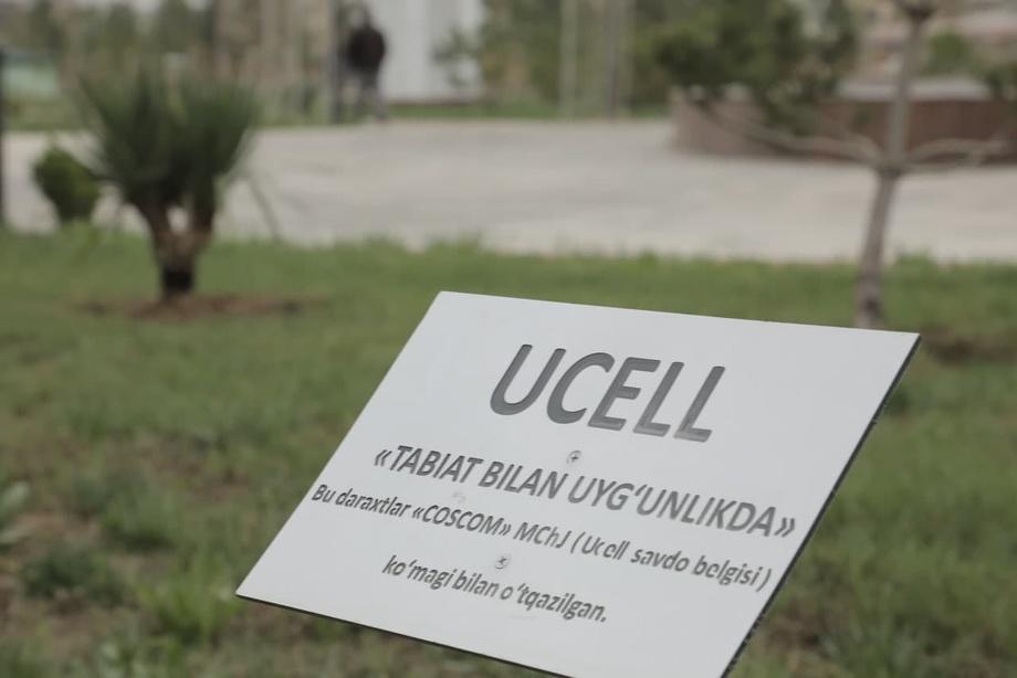 500 сосен от Ucell в Карши (видео)