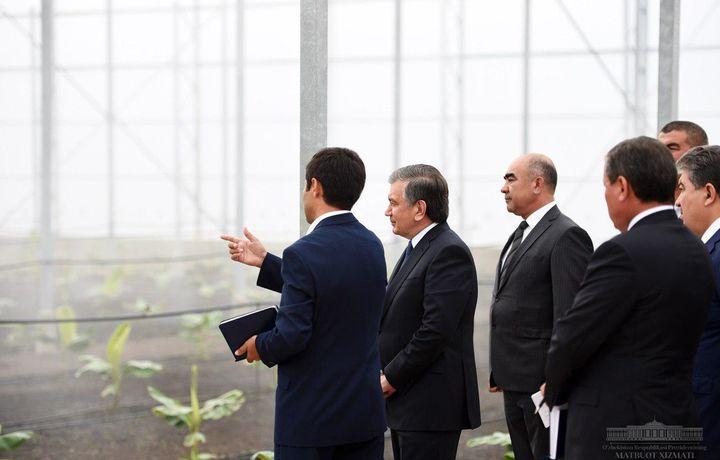 Президент банан ва помидор етиштирилувчи иссиқхонани бориб кўрди (фото)