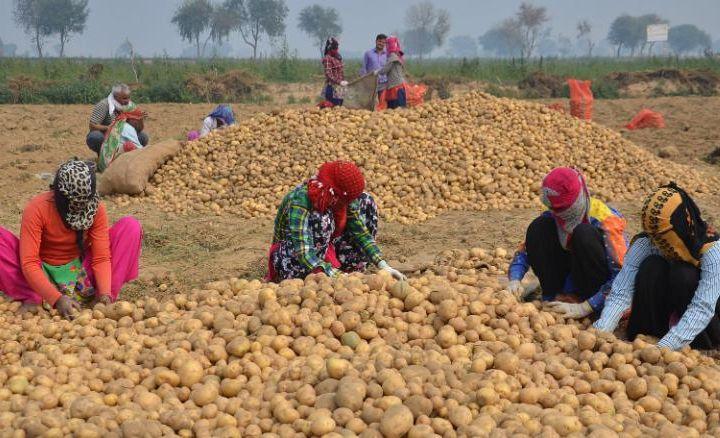 Картошка кимники? «PepsiCo» фермерлардан жарима ундирмоқчи