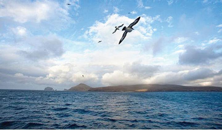 Янги Зеландияда тўлқин 23,8 метргача кўтарилди