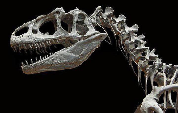 Париждаги аукционда динозавр скелети деярли 1,5 миллион еврога сотилди