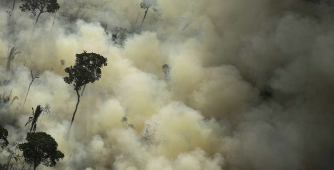 США и Бразилия создадут фонд сохранения лесов Амазонии