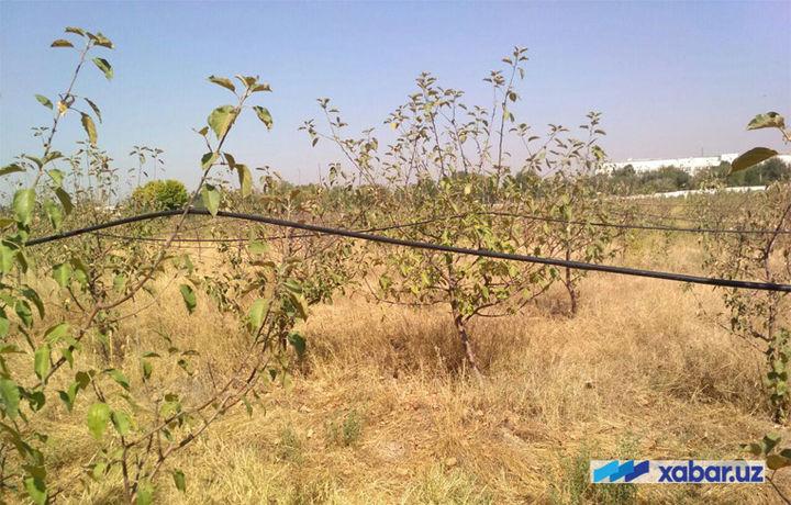 SOS: Тошкентдаги боғ қуриб қолади (фото)