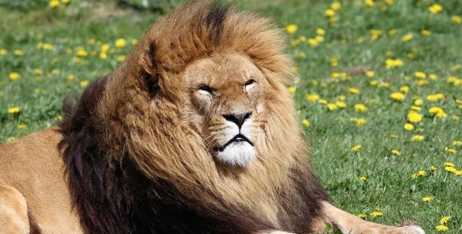 Посетительница зоопарка в Нью-Йорке залезла в вольер