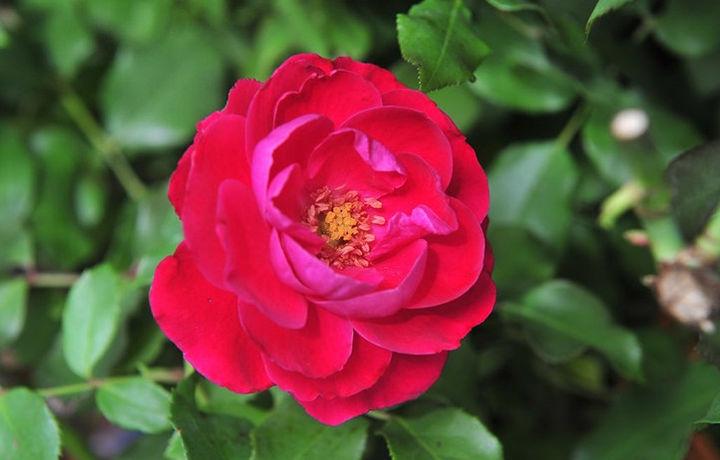 Журналисты в Душанбе дарили мужчинам розы