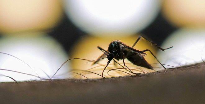 В Таиланде объявили эпидемию лихорадки денге