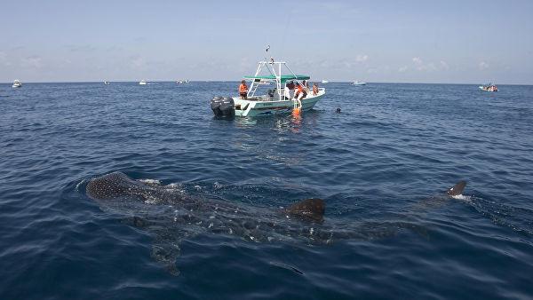 Во Флориде рыбаки сняли на видео самую большую рыбу в мире