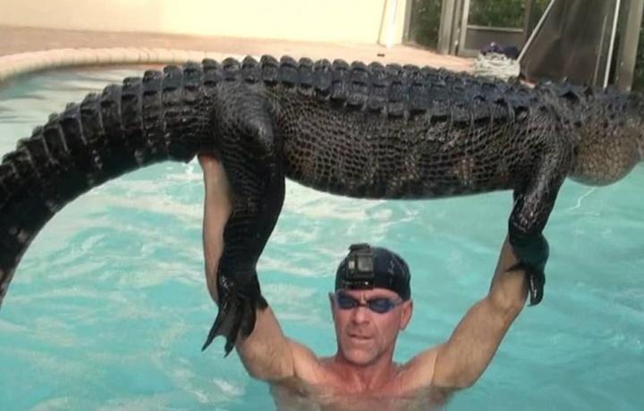 Заплутавшего аллигатора вытащили из частного бассейна (ФОТО)