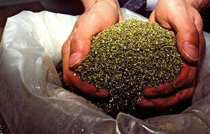 Термиздаги хонадондан 21 килограмм марихуана топилди