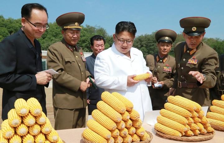 Более 10 млн жителей КНДР столкнулись с нехваткой продовольствия